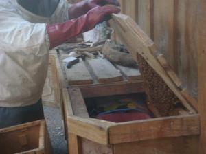 Visiting bees